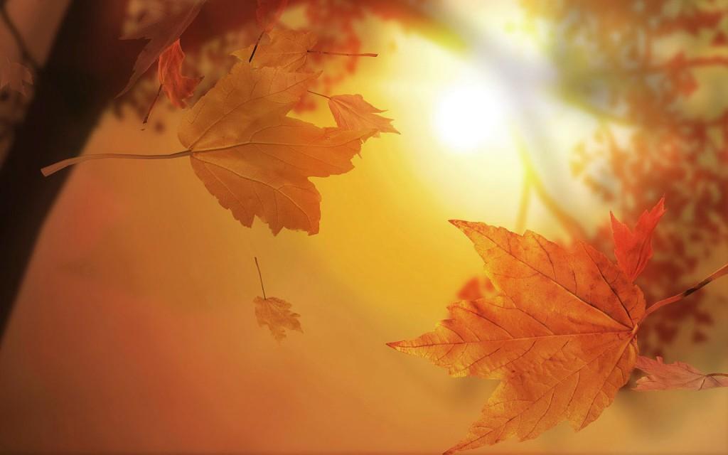 Gouden herfstbladeren